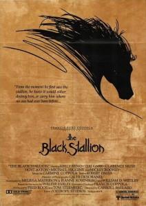 arabian horse the black stallion