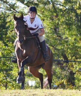 Equestrian care fir aging horses