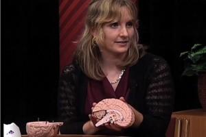 bachelors in psychology professor talks about brain myth