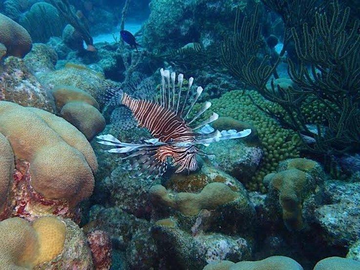 Why marine biology matters5